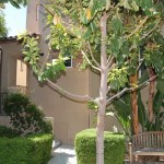215 Tall Oak, Irvine, $735,000